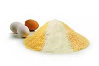 eggShell_and_powder